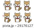 柴犬の表情のバリエーション 29176127