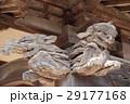 130309-08 西林寺 29177168