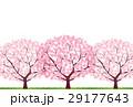 桜 29177643