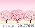 桜 29177645