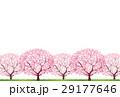 桜 29177646