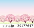 桜 29177647
