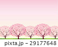 桜 29177648