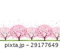 桜 29177649