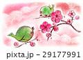 ウグイスの春 29177991