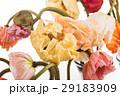 お花 フラワー 咲く花の写真 29183909