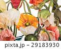 お花 フラワー 咲く花の写真 29183930