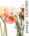 お花 フラワー 咲く花の写真 29183960