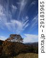 横根山 巻雲 雲の写真 29183965