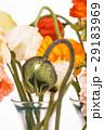 お花 フラワー 咲く花の写真 29183969