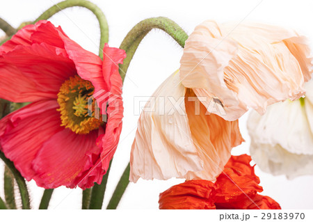 Daisy and poppy flowers bouquet 29183970