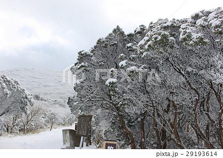 牧ノ戸峠の樹氷 29193614