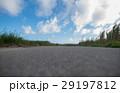 さとうきび畑 波照間島の畑道で撮影したサトウキビ畑 29197812