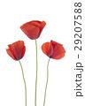 お花 フラワー 咲く花の写真 29207588