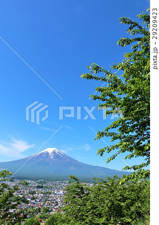 五月晴れの青空 富士山と新緑の葉桜 29209423