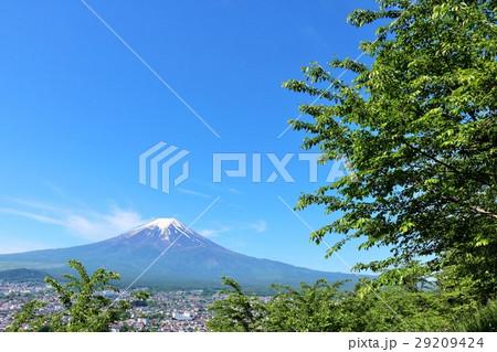 五月晴れの青空 富士山と新緑の葉桜 29209424