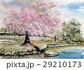 桜 公園の桜 兼六園 29210173