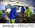 賀露港 カニ漁 選別 29211735