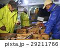 賀露港 カニ漁 選別 29211766