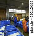 卸売市場 出荷作業 水産 カニ 29212099