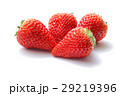 イチゴ 苺 ストロベリーの写真 29219396