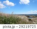 浜辺に咲く花 29219725