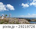 浜辺に咲く花 29219726