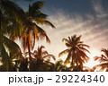 Palms, tropical vacation background 29224340