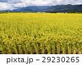 水田 米 稲の写真 29230265