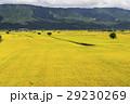 水田 米 稲の写真 29230269