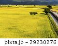 水田 米 稲の写真 29230276