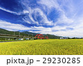 即將收成的水稻,在台灣的東部。 29230285