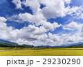 水田 米 稲の写真 29230290