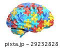 自閉症 脳みそ 立体のイラスト 29232828