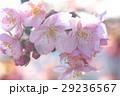 桜88 29236567