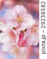 桜918+ 29236582