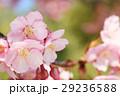 桜988 29236588