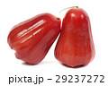 rose apples on white background. 29237272
