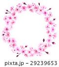 花 フラワー 桜のイラスト 29239653
