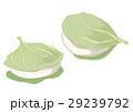 柏餅 和菓子 端午の節句のイラスト 29239792