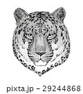 Wild cat Leopard Cat-o'-mountain Panther Hand 29244868