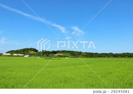 夏の青空 新緑の田んぼ風景 29245081