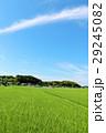 夏の青空 新緑の田んぼ風景 29245082