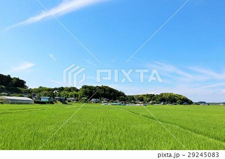 夏の青空 新緑の田んぼ風景 29245083