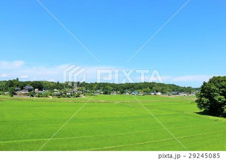 夏の青空 新緑の広大な田んぼ 29245085