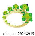 森林 成長 木のイラスト 29248915