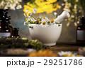 代わり フラワー 花の写真 29251786
