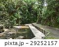 小川 森林 川の写真 29252157