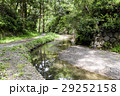小川 森林 川の写真 29252158