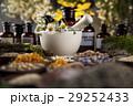 代わり フラワー 花の写真 29252433